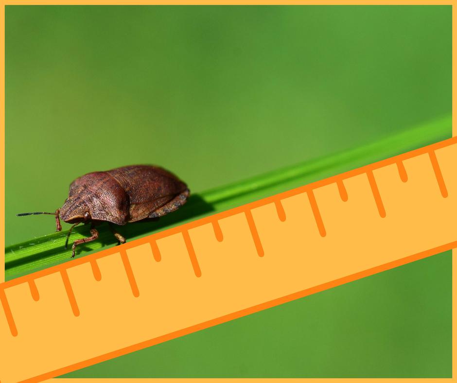 scaraffone misurazione prodotto